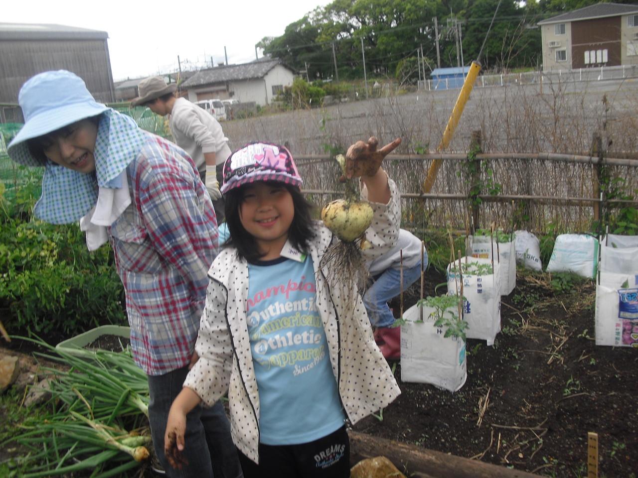 玉ねぎを収穫!
