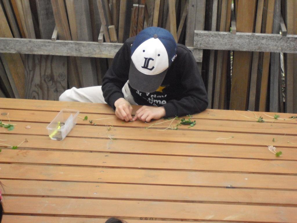 こちらは「ハコベラ」の葉っぱで10円磨き体験。