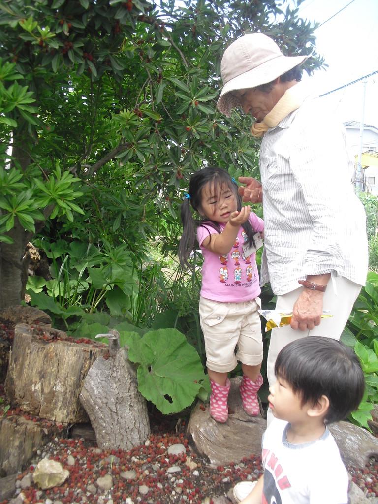 ふじっころ村のヤマモモがいっぱいなっています。今年はどうやっていただこうかしら…