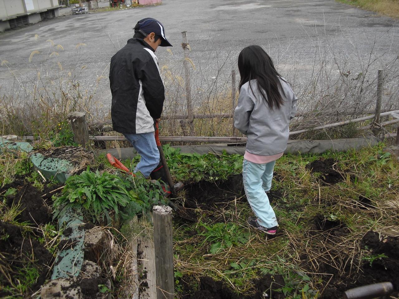来年の米作りのために、土の下に引いたシートを強化し、水を田んぼにできるだけ留めておくようにしたいのです。