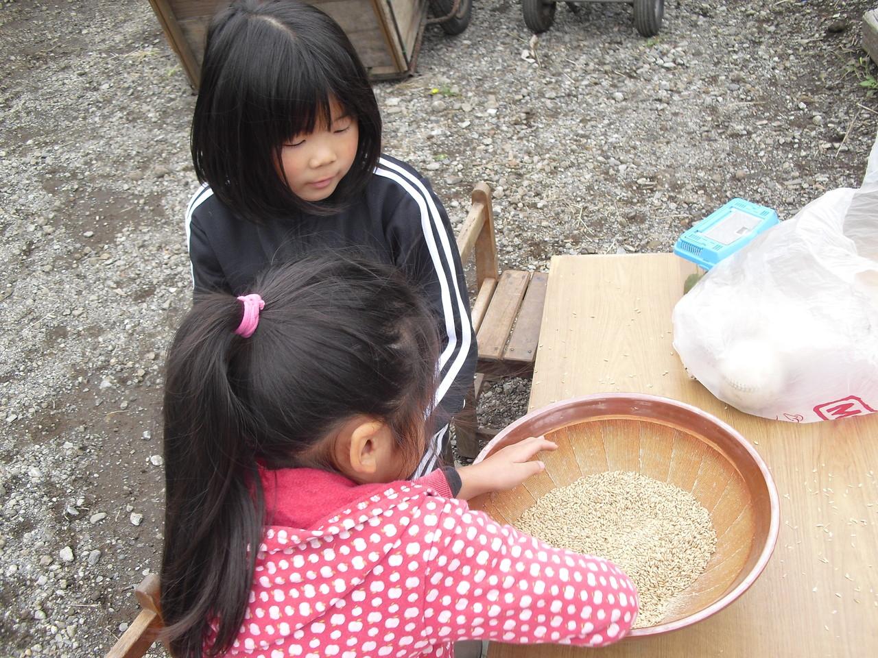 こちらは、先日のお米をすり鉢で混ぜて脱穀をしています。