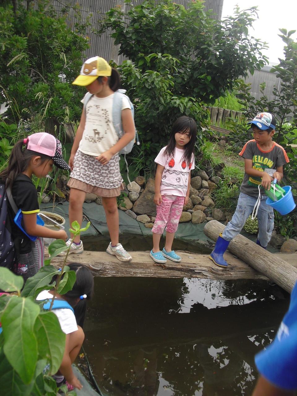ふじっころ村に帰って持ち帰らない生き物達を池に放しました。