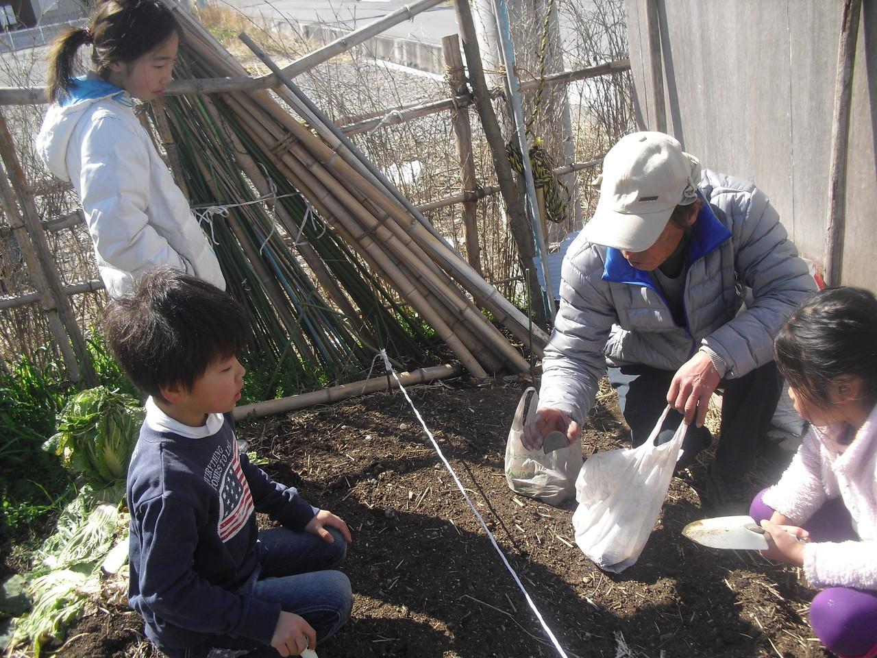 帰って来てからは、ジャガイモの植え付けをしました。