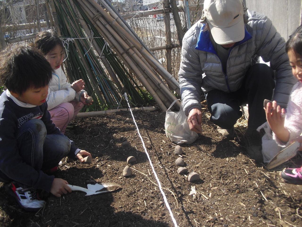 穴を掘って種芋を入れて、土を上からやさしくかけていきます。