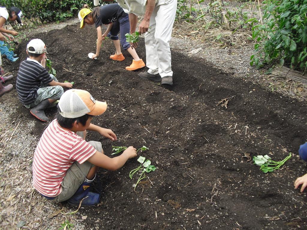 ふじさんのお母さんの畑を借りて、お芋のつるさしもさせてもらいました。