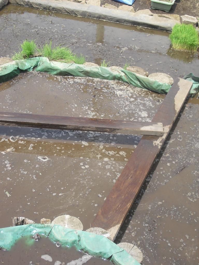 今日のもう一つの目玉は田植え!棚田にもお水がはられています。