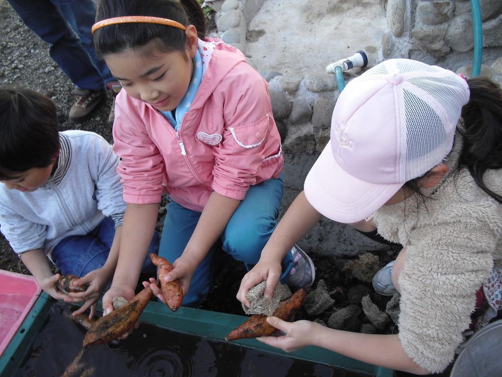 切干いもに使うお芋は「ニンジン芋」と呼ばれる赤みの強い、水分の多いお芋です。