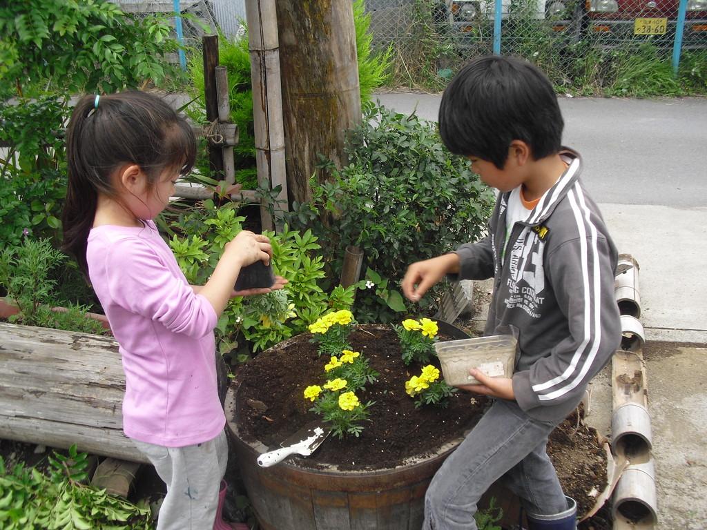 こちらの樽にもお花を植えます。