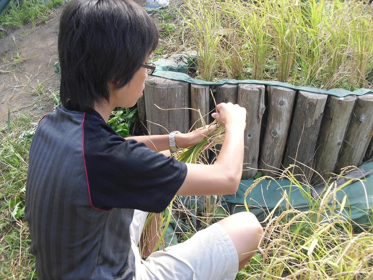 毎年恒例のお米作り。稲刈りも慣れた手つきで進めてくれる子も増えてきました。