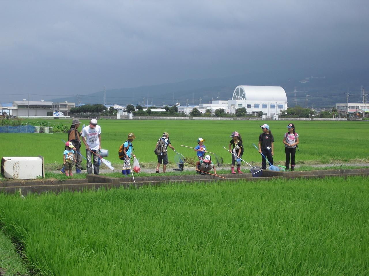 田んぼの中を歩く、この風景がとても好きです。年に一度のお楽しみ〜