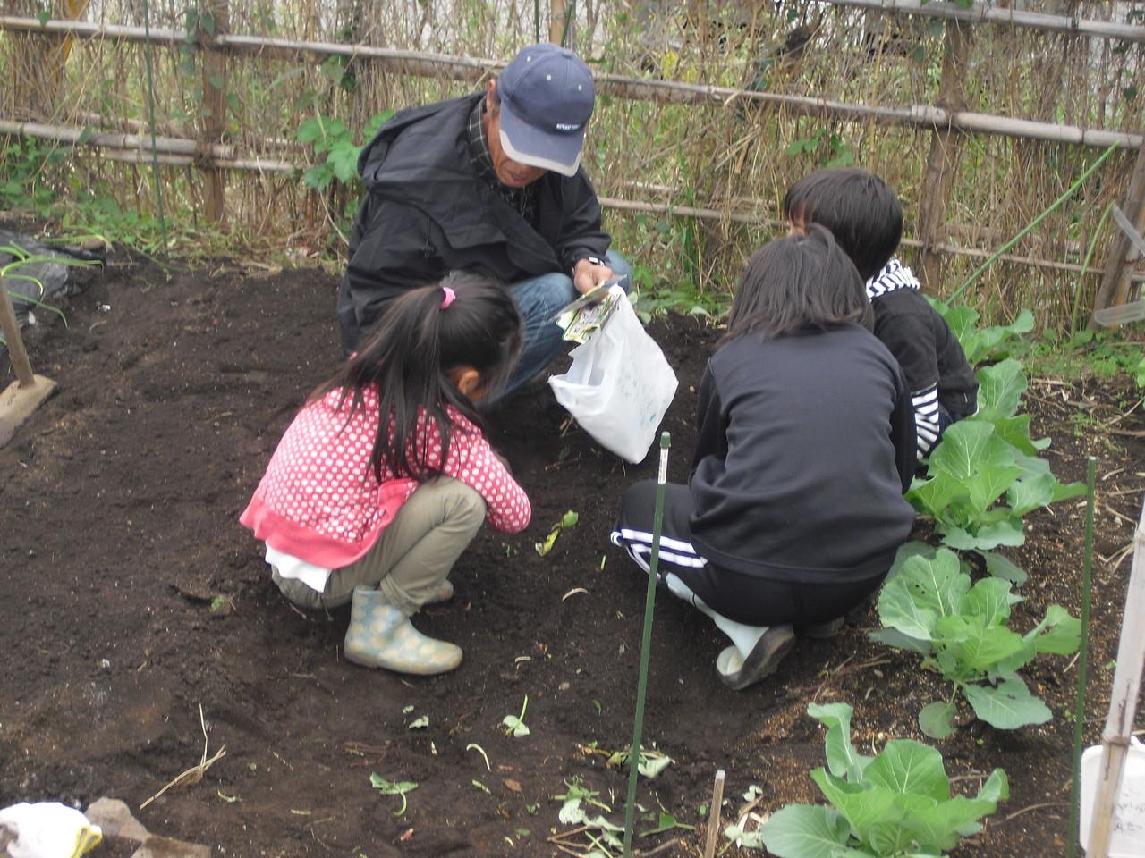 お芋が終わったところにまた新たな植物の種を植えています。