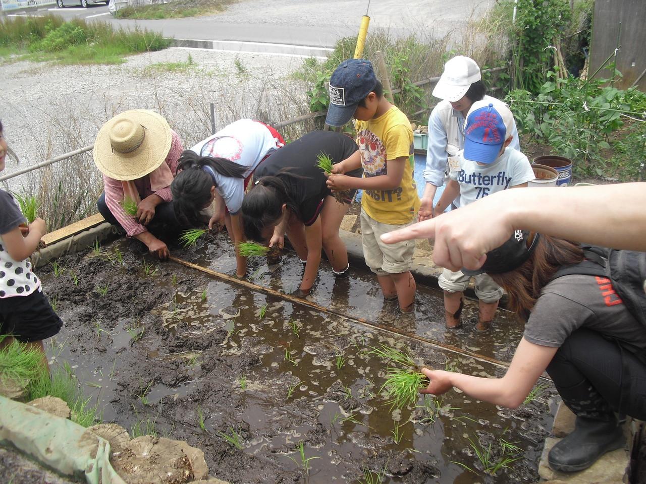 なんとか田植えも終了!今年もおいしいお米に育ってね。