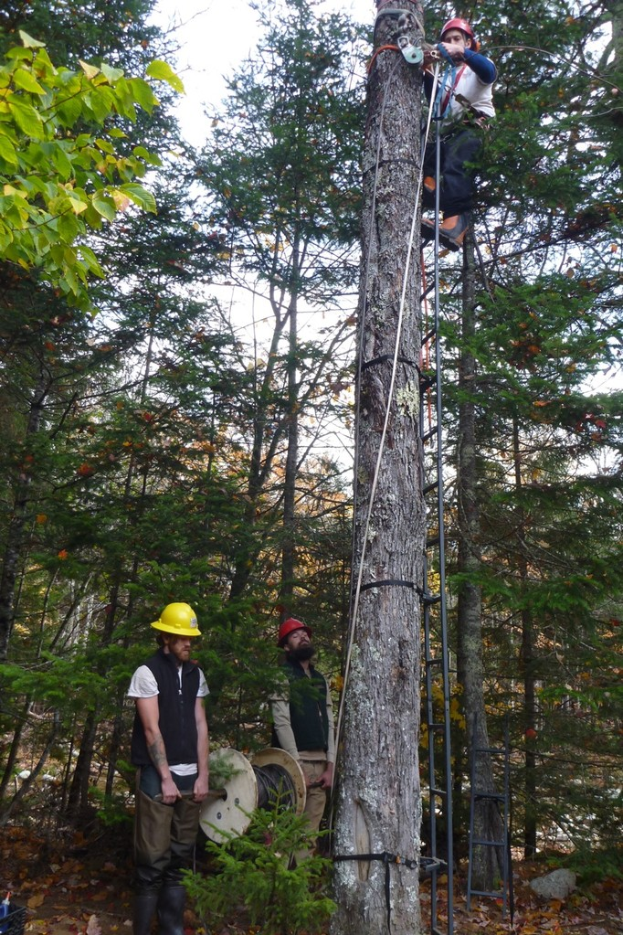 Chris and Robert hold the spool of wire rope as Jed sets the spar block 20' up in the tree