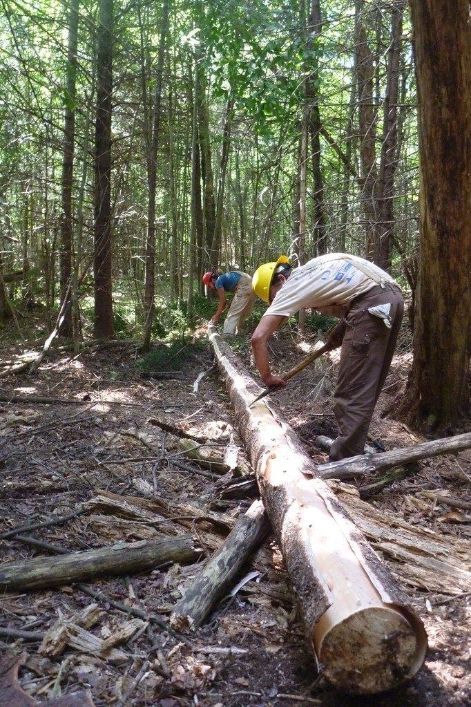 A spruce tree is peeled and prepped to use as a bridge