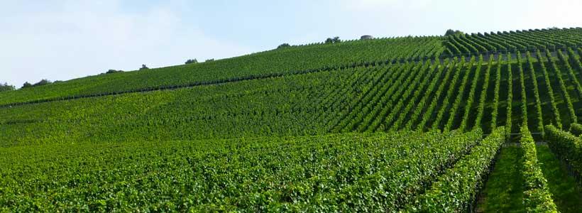 Weingut Hiller Weinberg