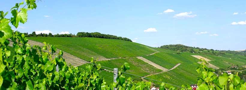 Weingut Hiller am Marsberg