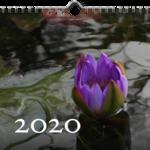 Pflanzen Wandkalender 2020, 20x20 cm, ausverkauft