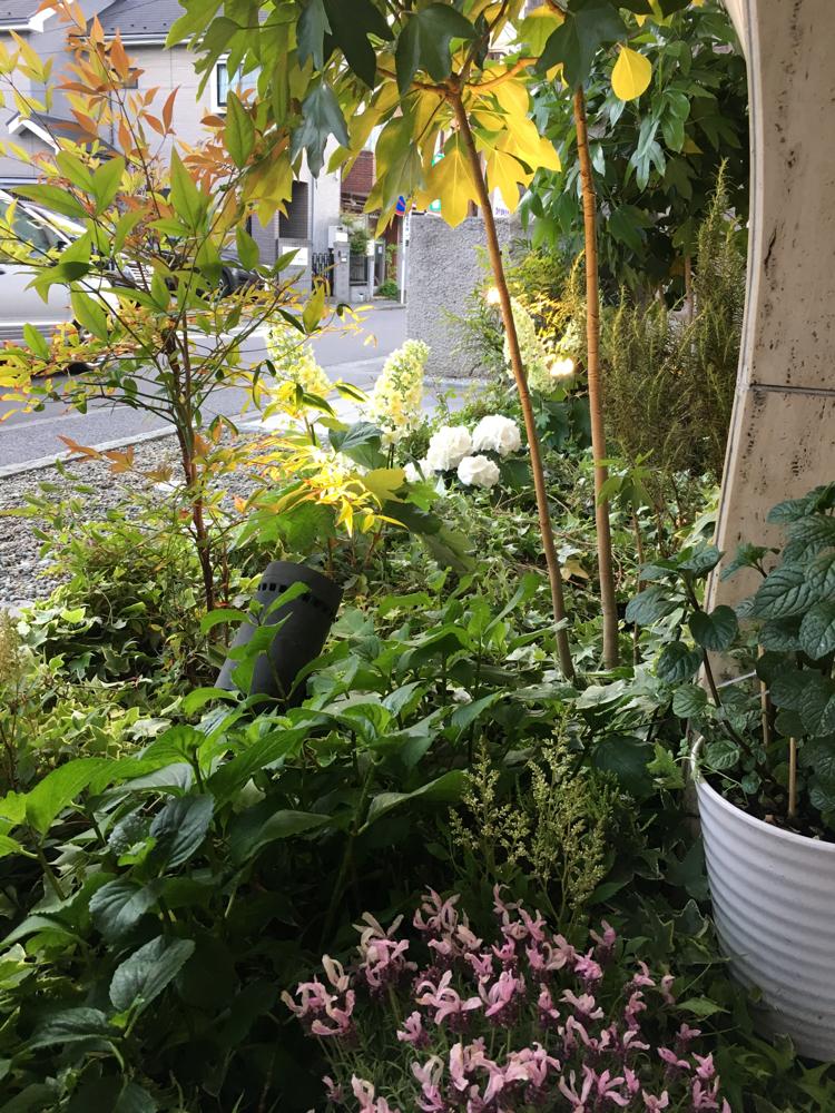 ハーブ、寄せ植え、紫陽花、アスチルベ