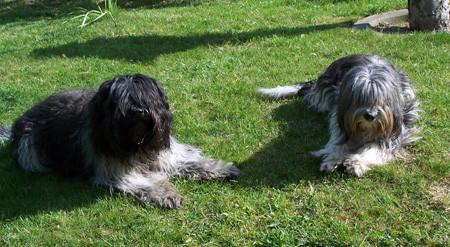 Hier sind nun Netha und Buck zu sehen, obwohl Netha hatte ständig die Schlossbergzwerge im Blick und im Gehör. Denn Vorsicht ist besser als Nachsicht.
