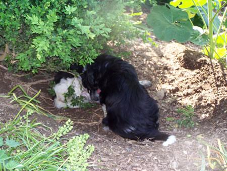 Shorty muss erst Chica um Erlaubnis fragen, ob auch er in die Höhle darf.