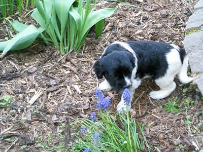 Wie riecht denn das ? Erste Begegnung mit einer Blume.