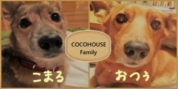 COCOHOUSE ファミリー