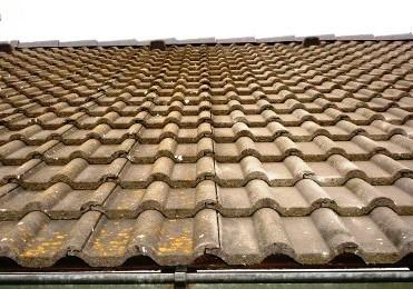 Flechten am Dach