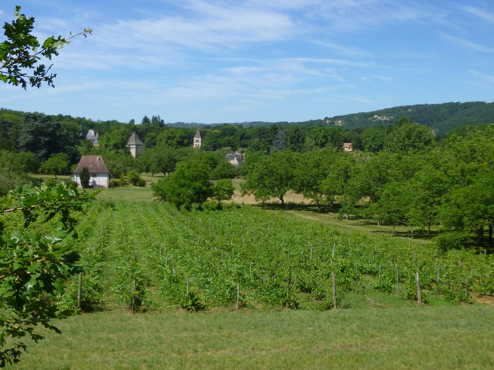 Saint Léon sur Vezere et ses vignes