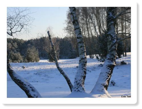 Oberohe im Winter