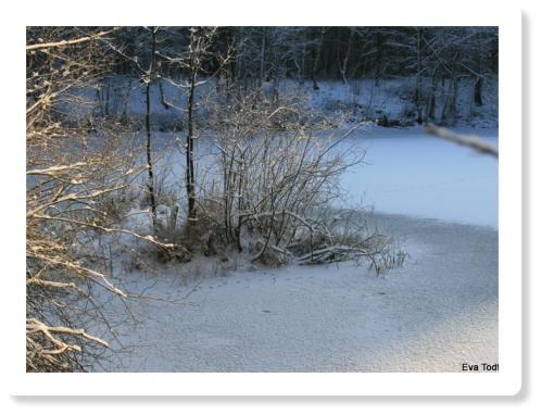 Teich in Oberohe