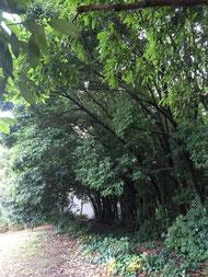 横浜国大の森