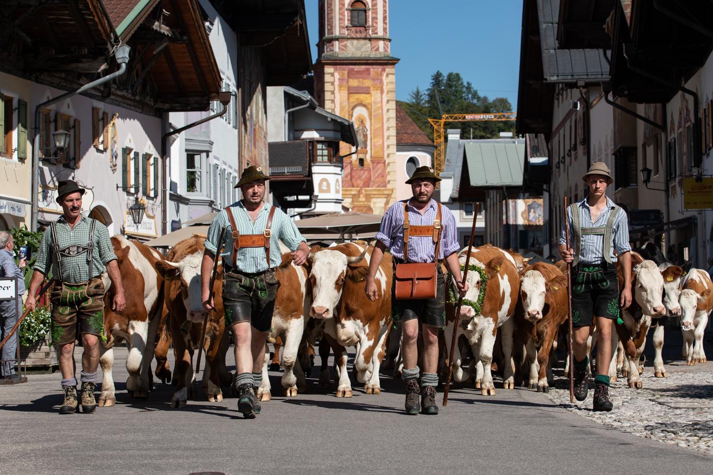 Rinderabtrieb 2021 in Mittenwald