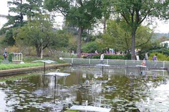 鎌倉市・大船フラワーセンターのスイレン池
