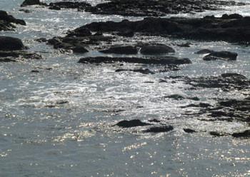 神奈川県・大磯の照ヶ崎の岩場