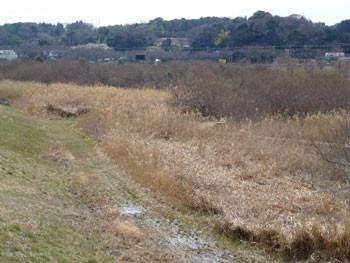 藤沢市・引地川親水公園の自然ふれあい湿地帯