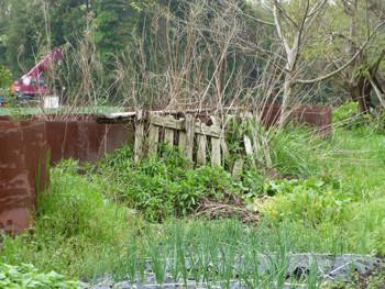 藤沢市・石川の空き地のドラム缶と草花