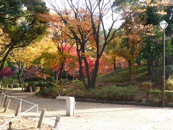 横浜市・横浜公園の紅葉