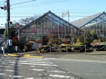 藤沢市・善行の花屋「ゆいのはな」