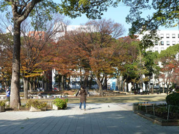 横浜・横浜公園のみなと大通り付近の紅葉
