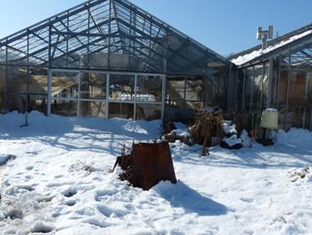 藤沢・雪の日のビニールハウス