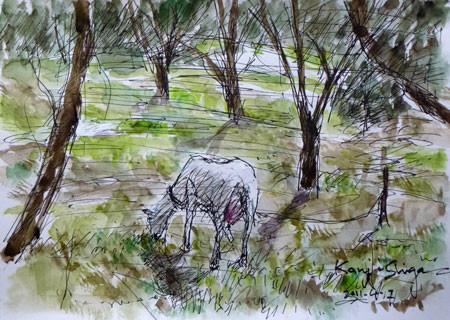 藤沢市・大庭の農家のヤギ