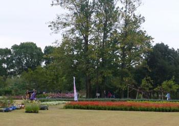 鎌倉市・大船フラワーセンターの花壇広場