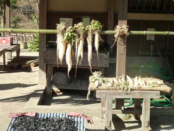 横浜市舞岡公園・小谷戸(こやと)の里の干した大根