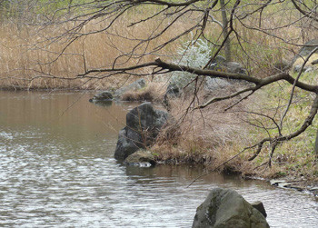 横浜・四季の森公園のあし原湿原