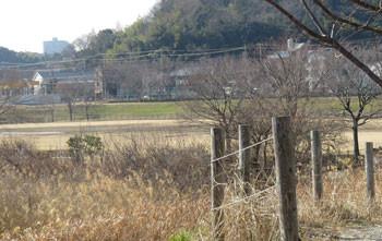 藤沢・引地川親水公園の遊水地とスポーツ広場