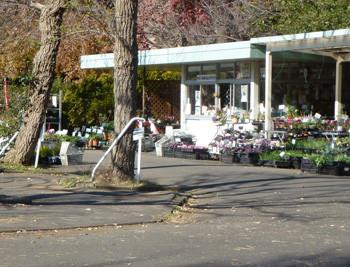 鎌倉市・大船フラワーセンターの花卉即売所
