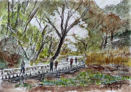 横浜・四季の森公園のあし原湿原とサクラ