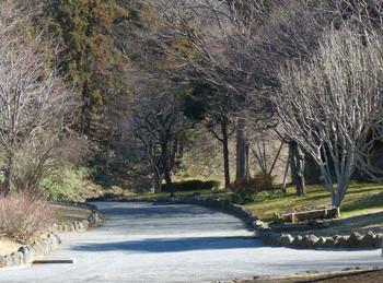 藤沢・新林公園の梅林から登山口