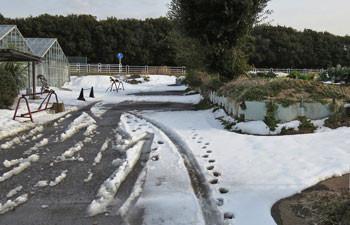 藤沢・雪の境川の遊歩道