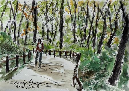大和市・泉の森の散歩道